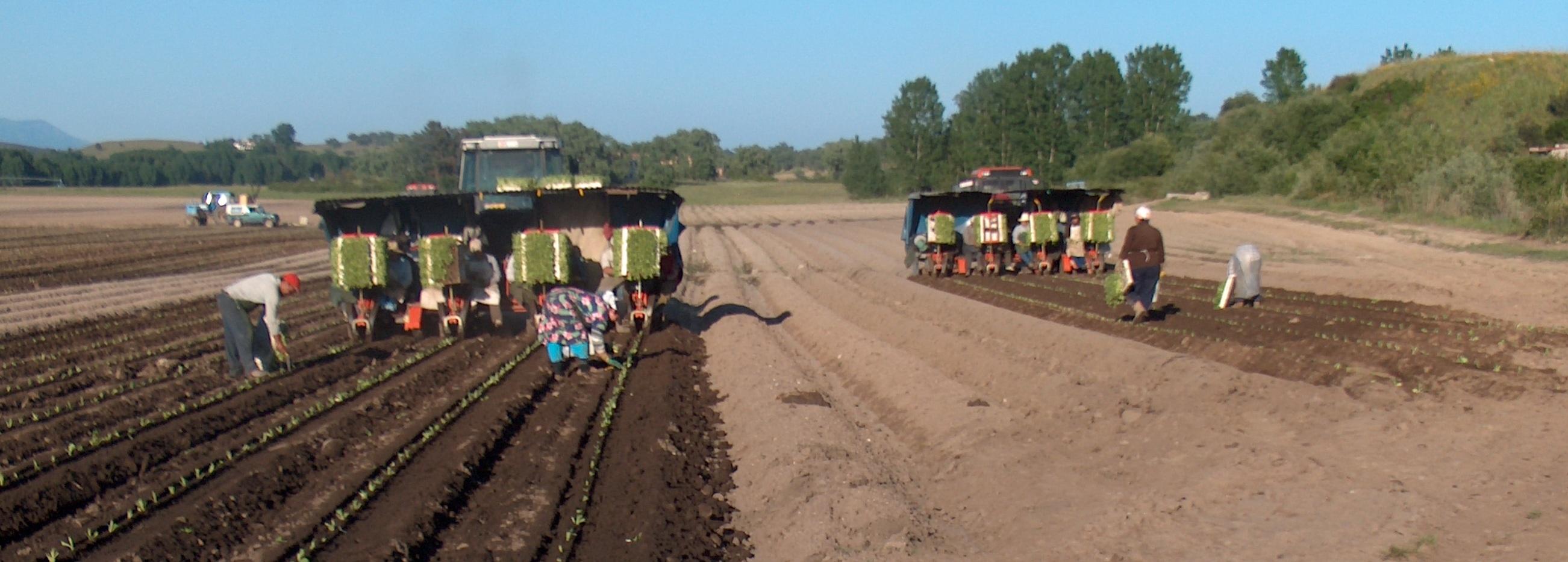 agricultores cultivando el campo