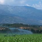 Riego de campo de cultivo