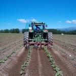 Arado del campo de cultivo