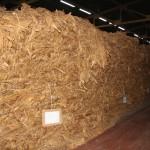 Pilones en proceso de fermentación Navalmoral