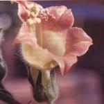 flor con polen
